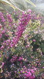 Poca flor púrpura Imagen de archivo libre de regalías