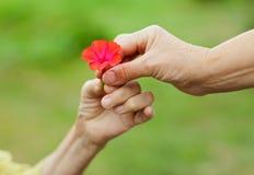 Poca flor roja Fotografía de archivo