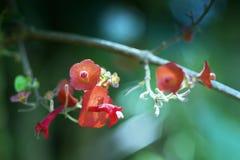 Poca flor roja en el fondo del bosque imagen de archivo