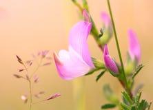 Poca flor rosada imagenes de archivo