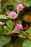 Poca flor rosada Foto de archivo