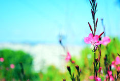 Poca flor rosada en un jardín Imagenes de archivo