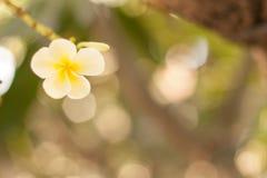 Poca floración de la flor en jardín con el fondo blanco del bokeh Fotografía de archivo libre de regalías
