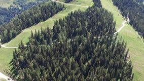 Poca foresta alpina video d archivio