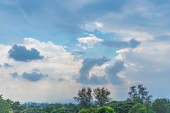 Poca foresta verde con cielo blu Immagini Stock