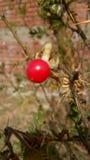 Poca fruta Fotos de archivo