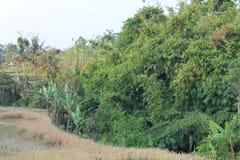 Poca giungla 2 Fotografia Stock