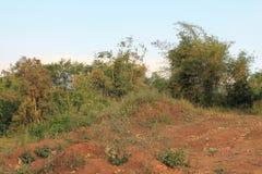 Poca giungla 11 Fotografia Stock