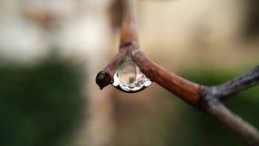Poca goccia di pioggia fotografia stock