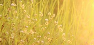 Poca hierba de la flor Fotografía de archivo