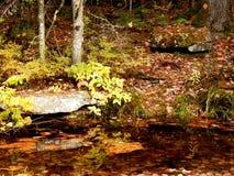 Poca insenatura nel legno con i colori dell'autunno Fotografia Stock