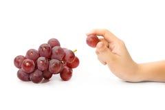 poca mano ha selezionato un'uva dal mazzo di uva rossa isolata sopra Fotografia Stock Libera da Diritti