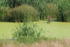 Poca orilla del lago del lago Fotos de archivo libres de regalías