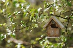 Poca pajarera en nuevas hojas de la primavera Fotografía de archivo libre de regalías