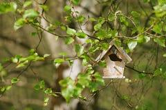 Poca pajarera en nuevas hojas del abedul de la primavera Imagen de archivo libre de regalías