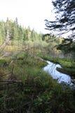 Poca palude in Quebec, Canada su estate Fotografia Stock