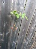Poca pianta Fotografia Stock