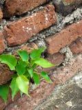 Poca pianta Fotografie Stock