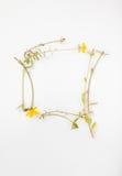 Poca pianta con i fiori gialli Fotografie Stock Libere da Diritti
