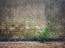 Poca pianta con il vecchio fondo della parete Fotografia Stock