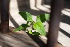 Poca planta en el edificio del moho Imagen de archivo libre de regalías