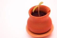 Poca planta en pequeño pote Imágenes de archivo libres de regalías