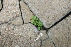 Poca planta que crece entre los azulejos Fotografía de archivo libre de regalías