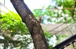 Poca rama que crece de fondo grande de la naturaleza del árbol Fotografía de archivo