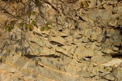 Poca ramita en medio de las rocas Fotografía de archivo libre de regalías