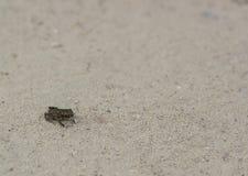 Poca rana verde de la tierra en el camino Fotografía de archivo libre de regalías