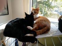Poca siesta para los gatos Foto de archivo libre de regalías
