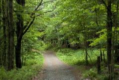 Poca strada attraverso la foresta verde Fotografia Stock Libera da Diritti