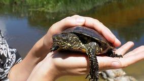 Poca tortuga del río en manos femeninas en un fondo del río almacen de video