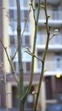 Poca vida verde Fotografía de archivo