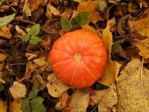 Poca zucca arancio davanti a Halloween immagini stock