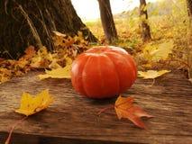 Poca zucca arancio davanti a Halloween fotografia stock libera da diritti