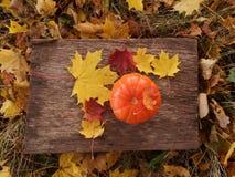 Poca zucca arancio davanti a Halloween fotografia stock
