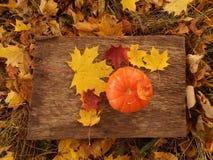 Poca zucca arancio davanti a Halloween fotografie stock libere da diritti