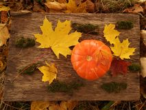Poca zucca arancio davanti a Halloween immagini stock libere da diritti