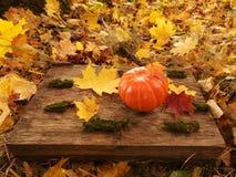 Poca zucca arancio davanti a Halloween immagine stock libera da diritti