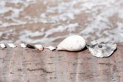 Pocas cáscaras del mar que mienten en fila en la palmera Fotografía de archivo