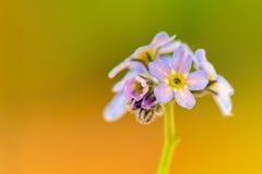 Pocas flores de la primavera Foto de archivo