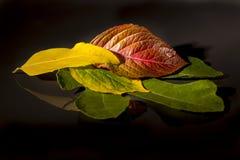 Pocas hojas reflejadas en un espejo Imagen de archivo libre de regalías