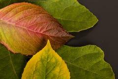Pocas hojas reflejadas en un espejo Fotos de archivo
