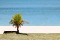 Pocas palmeras del coco en la playa por el mar Imagen de archivo libre de regalías