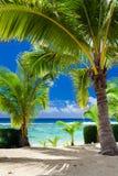 Pocas palmeras que pasan por alto la playa tropical en el cocinero Islands Imagenes de archivo
