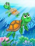 Pocas tortugas de mar Imagenes de archivo