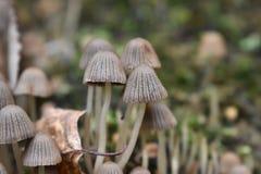 Poche coppie i funghi nella foresta fotografie stock libere da diritti