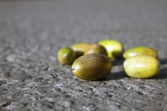 Poche ghiande non mature multicolori che si trovano sull'asfalto asciutto grigio fotografia stock libera da diritti