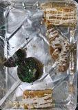 Poche pasticcerie in vassoio fotografie stock